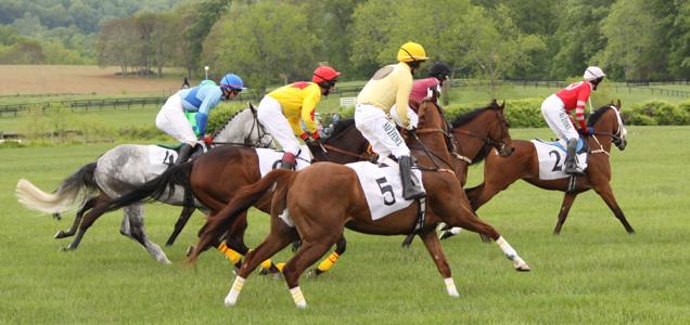 caballos-jinetes