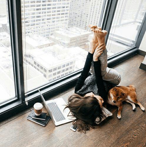 Perro-hogareno