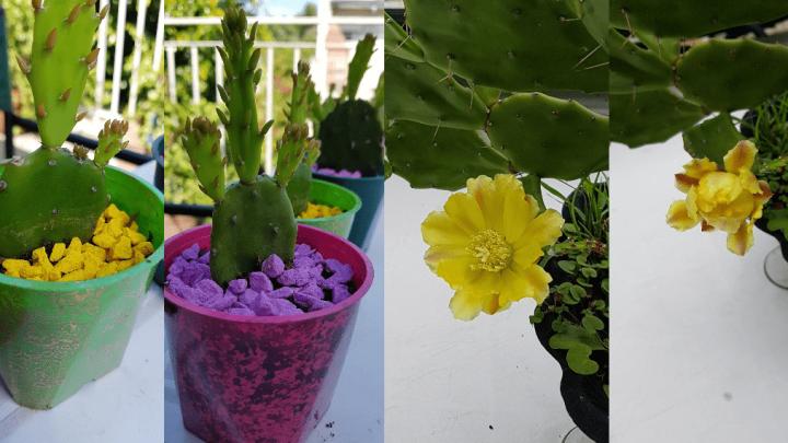 Emprende y cultiva cactus en tu hogar